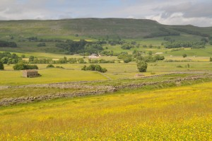 wensleydale meadow