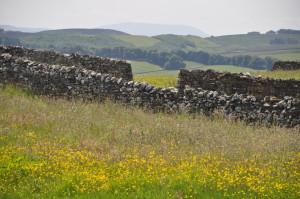 dales wall