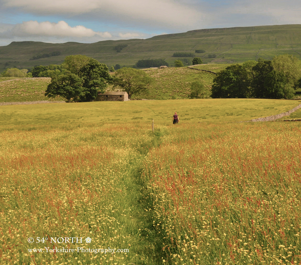 Summer meadow near Hawes, Wensleydale, Yorkshire