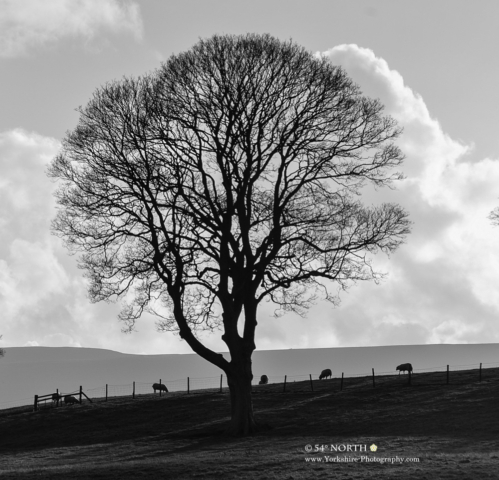 A cold winter's day in Wharfedale, Yorkshire
